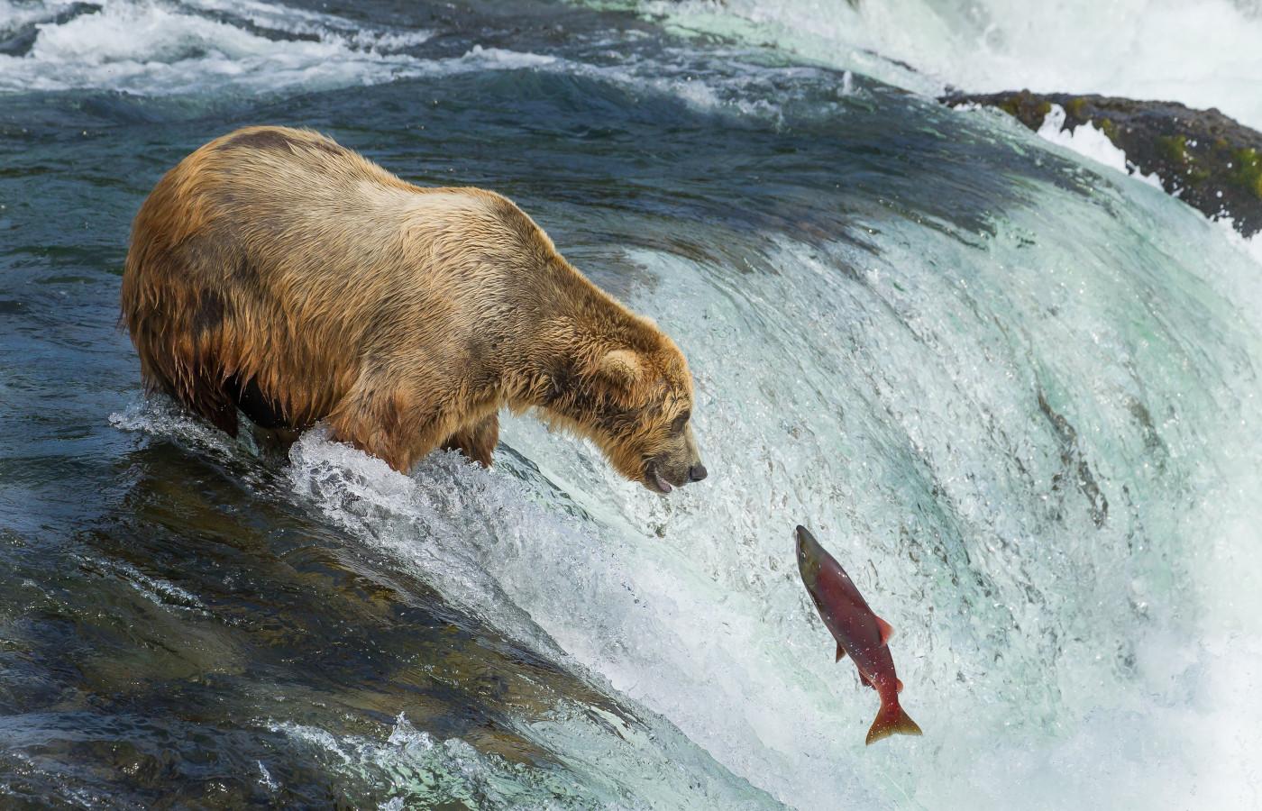 Westkanada mit Gletscher- und Bärenbeobachtung in Alaska komfort