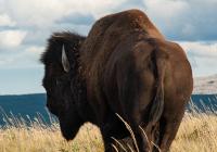Kanada Mietwagenreise - Auf den Spuren der Ureinwohner Westkanadas
